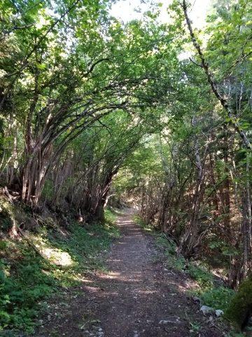 Forêt autour d'Oz