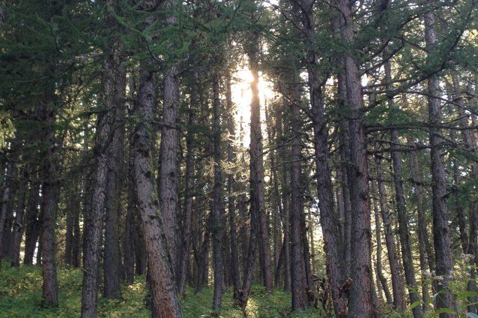 Forêt de Chancel La Grave