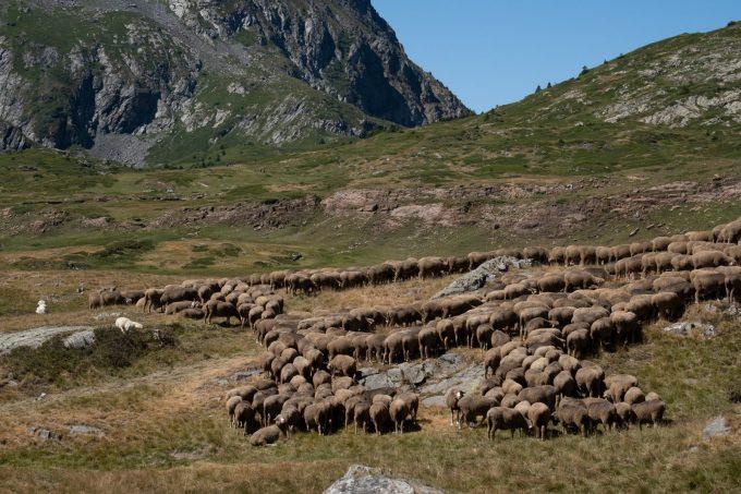 Alpage en Oisans
