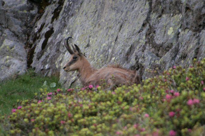 Randonnées naturaliste avec Horizons