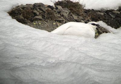 Randonnée raquettes au col du Lautaret – Vallon de Roche Noire avec Horizons / Sortie Marque Esprit Parc National