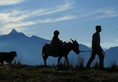 Séjour itinérant avec un âne