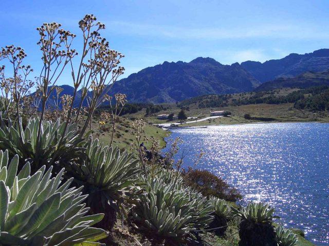 Paramo Laguna Mucubaji