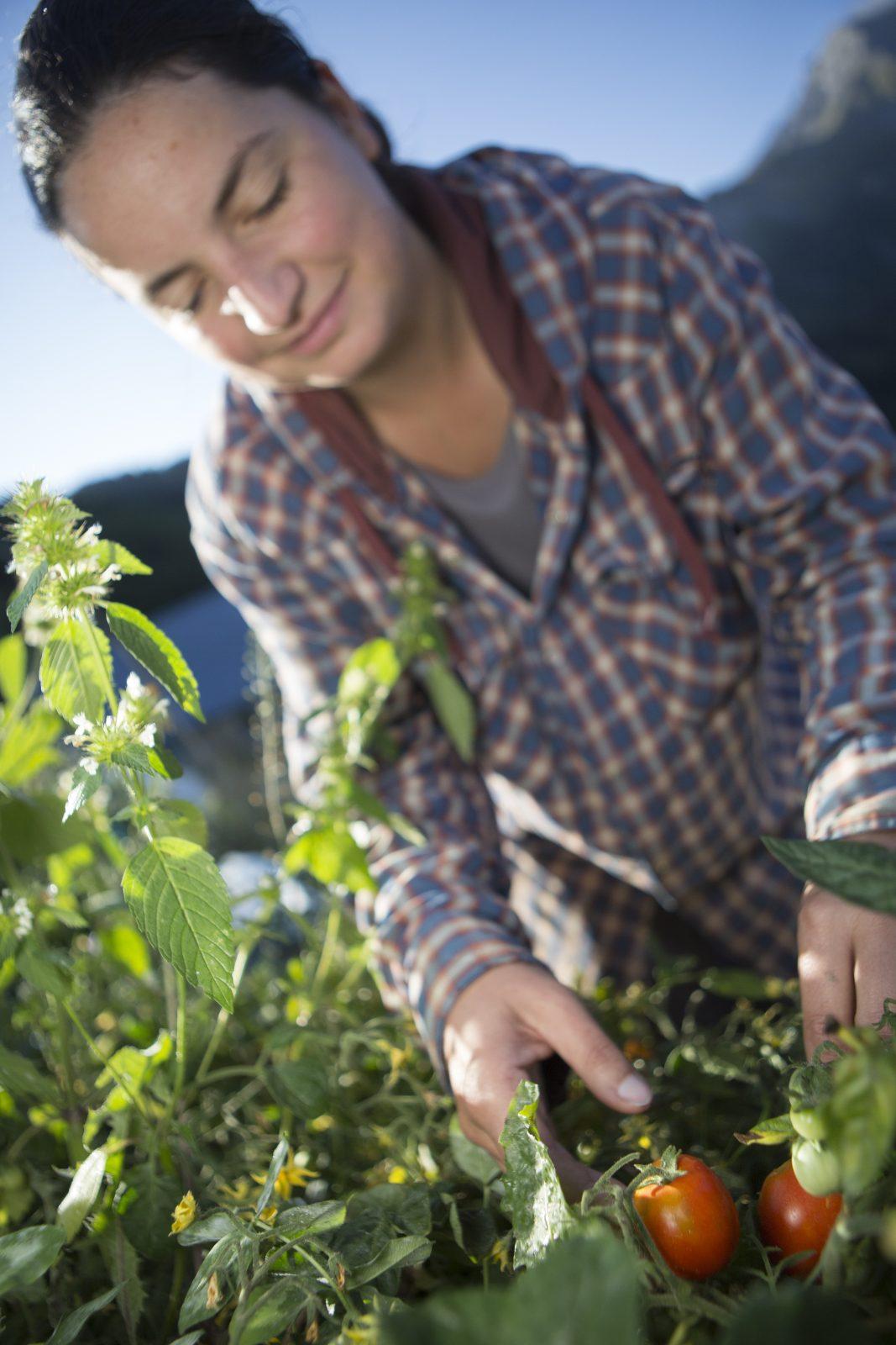 Ferme du Champ Perché – Légumes frais de saison (1)