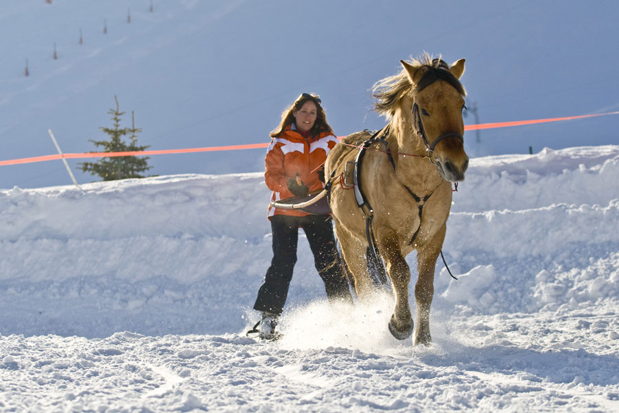 Initiation au Ski Joëring (2)