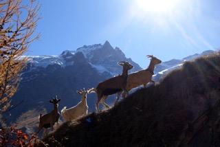 Balade champêtre avec les chèvres