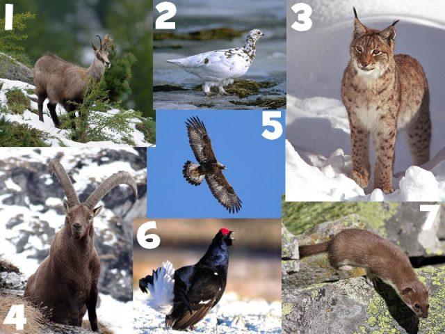 Z'animalpes Quiz