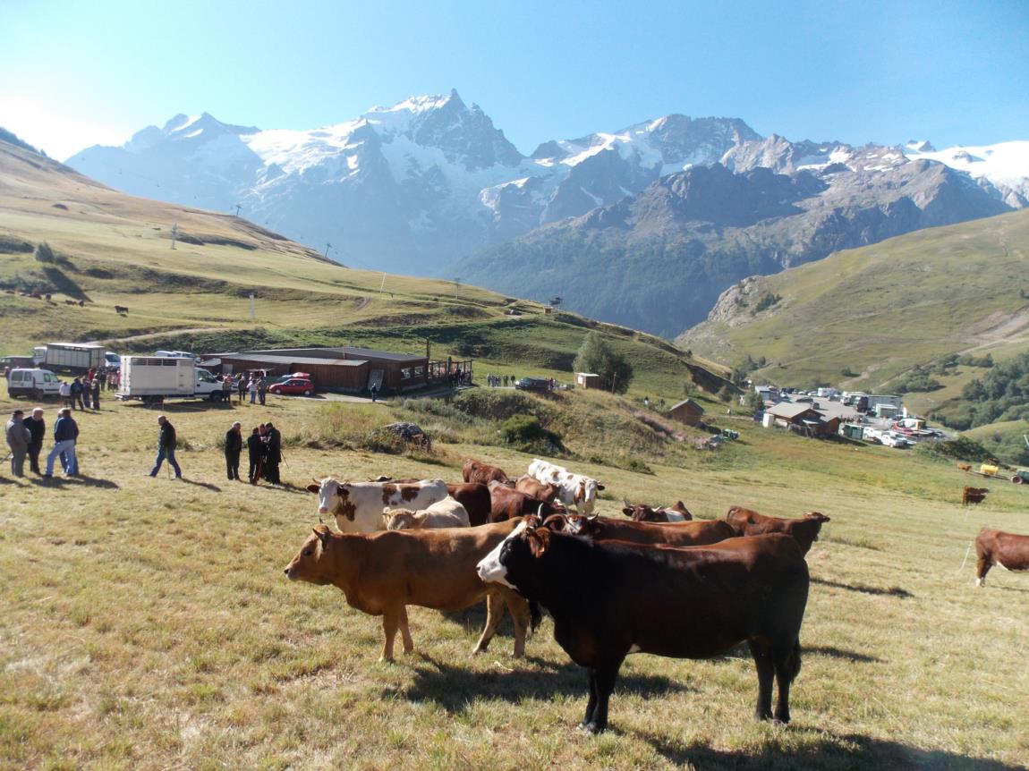 Foire aux bovins (4)