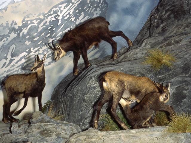 Musée des Minéraux et de la Faune des Alpes (2)