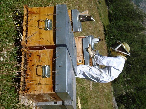 Un Ecrin de Miel – apiculteur (1)