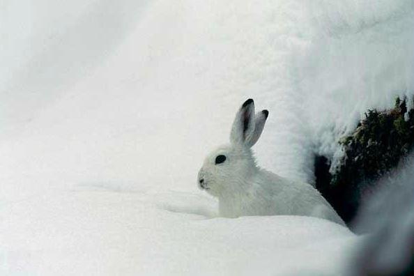 Accompagnez un Garde-Moniteur à la recherche des traces de la faune en hiver (8)