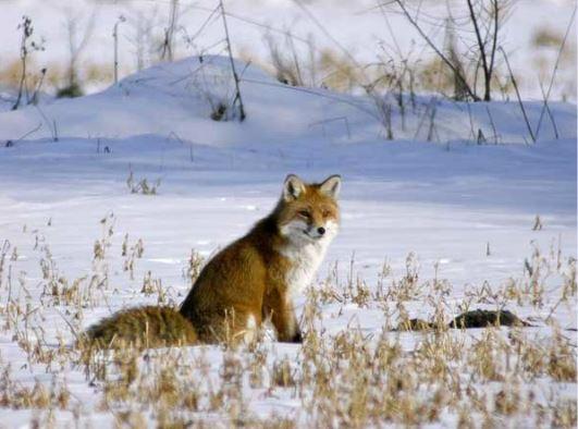 Accompagnez un Garde-Moniteur à la recherche des traces de la faune en hiver (5)