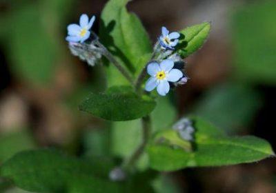 Balade : découverte de la flore du Parc National des Ecrins