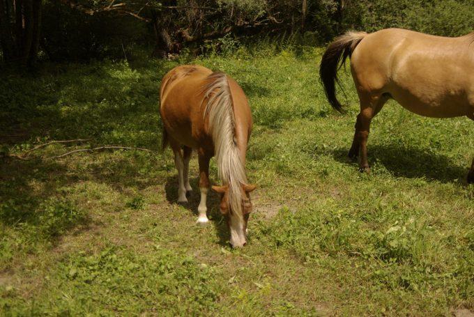 Poneys Caval'Oisans