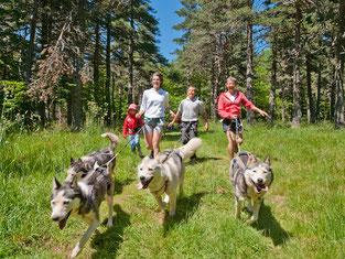 Second Souffle – activités canines estivales