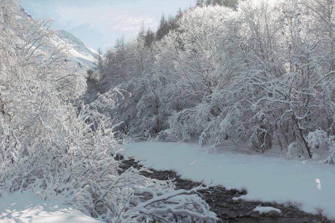 Forêt Arsine
