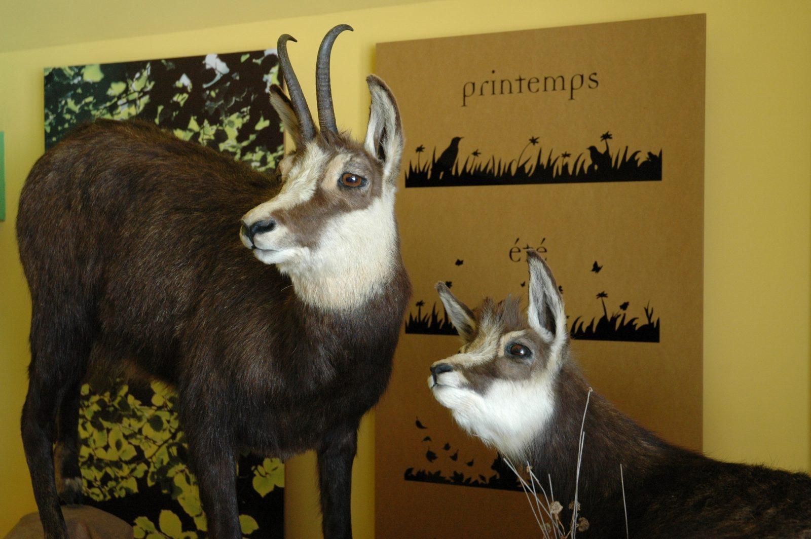 Observation de la faune à la longue vue