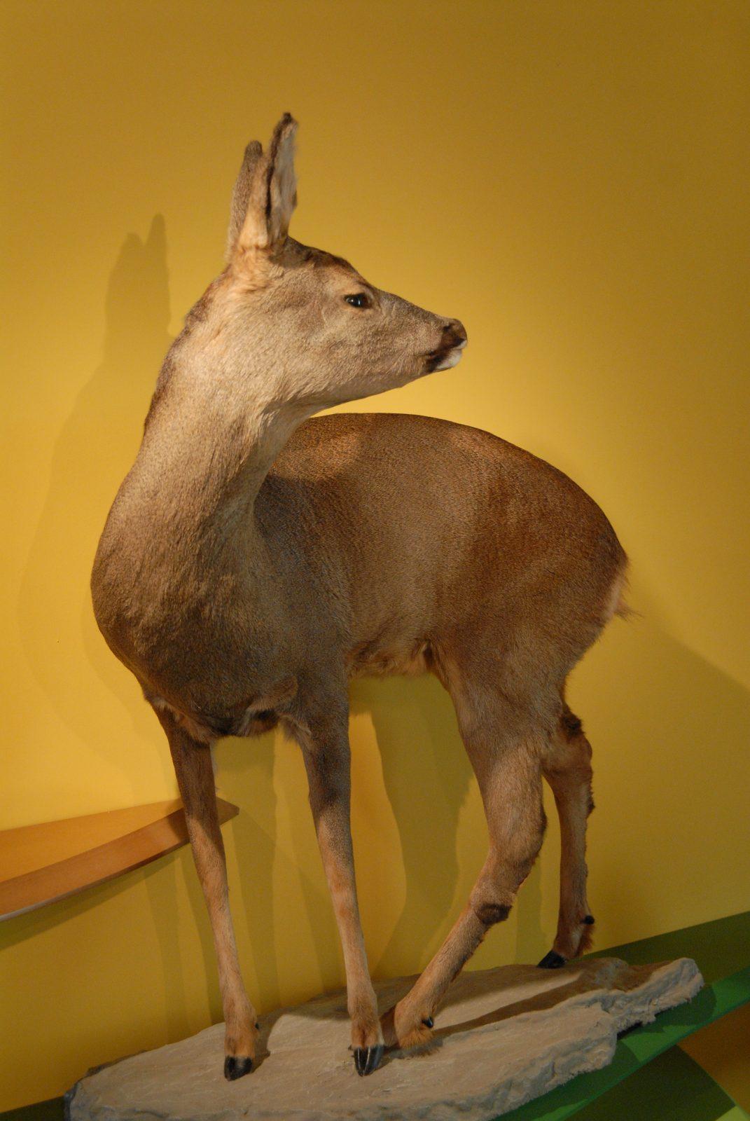 Observation de la faune à la longue vue (1)