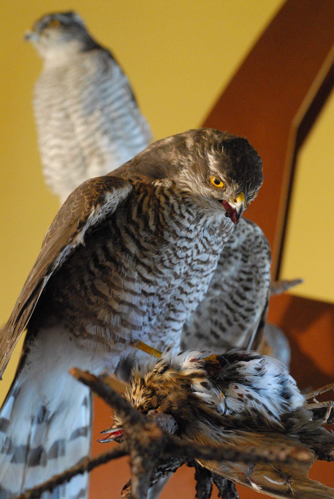Observation de la faune à la longue vue (2)