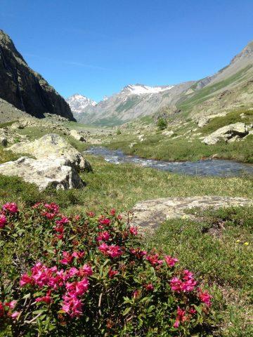 La Romanche, plan de l'Alpe