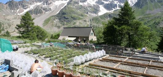 Jardin Botanique Alpin Du Lautaret (2)