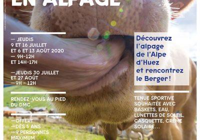 Balade en Alpage et rencontre avec le berger