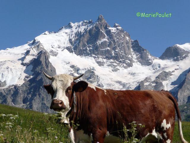 Foire aux bovins (5)