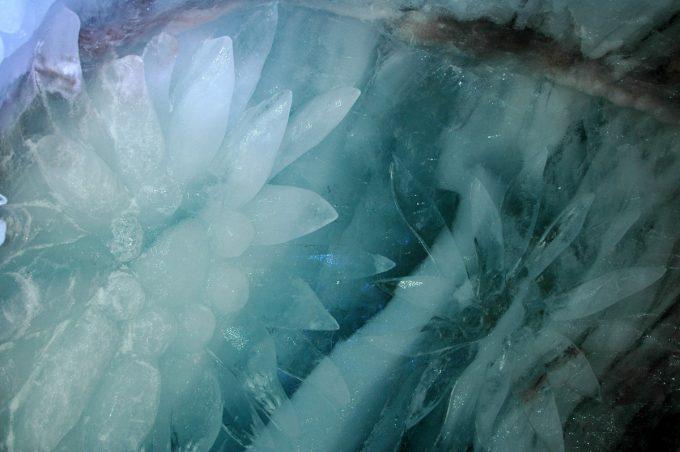 Edelweiss Grotte de glace La Grave
