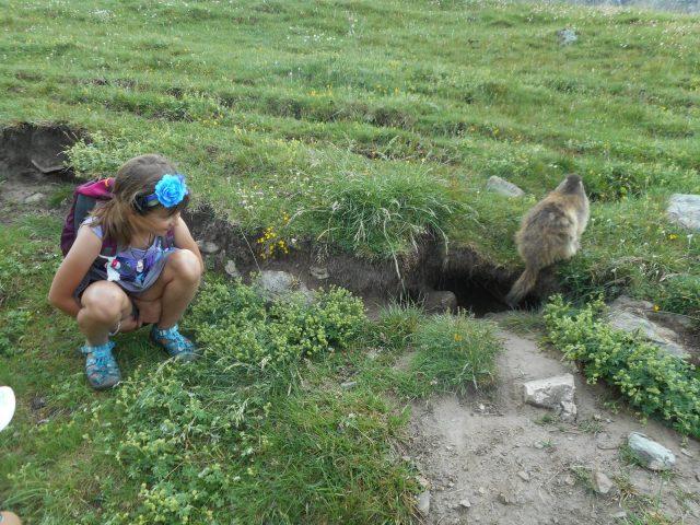 Une marmotte vraiment pas farouche -Refuge de la Chamoissière – Villar d'Arène – La GraveRefuge de Chamoissière