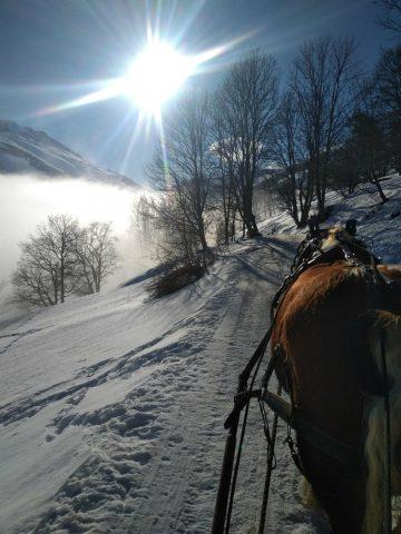 Traîneau à cheval