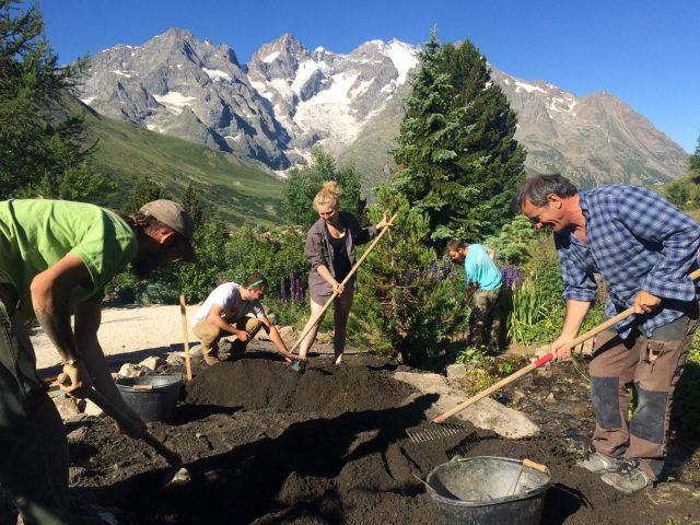 Travail au Jardin alpin du Lautaret – La Grave – La Meije