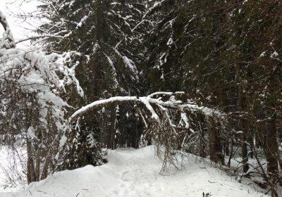 Balade en raquettes – Venosc Village – Cascade de la Muzelle