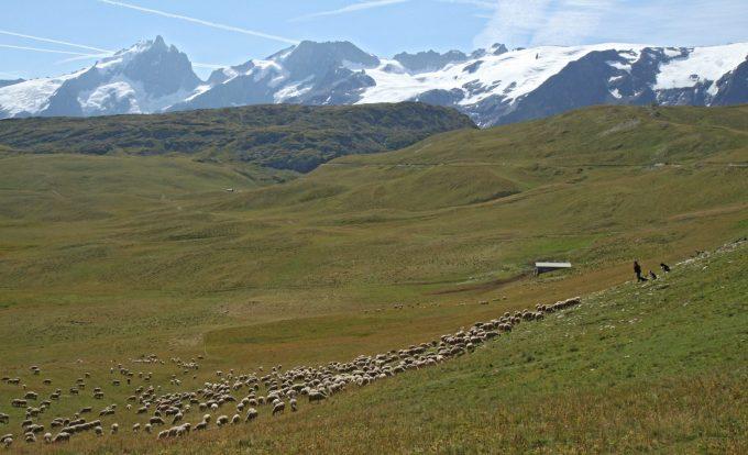 Alpage et troupeau sur le plateau d'Emparis