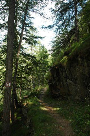 GR54 forêt de Villar
